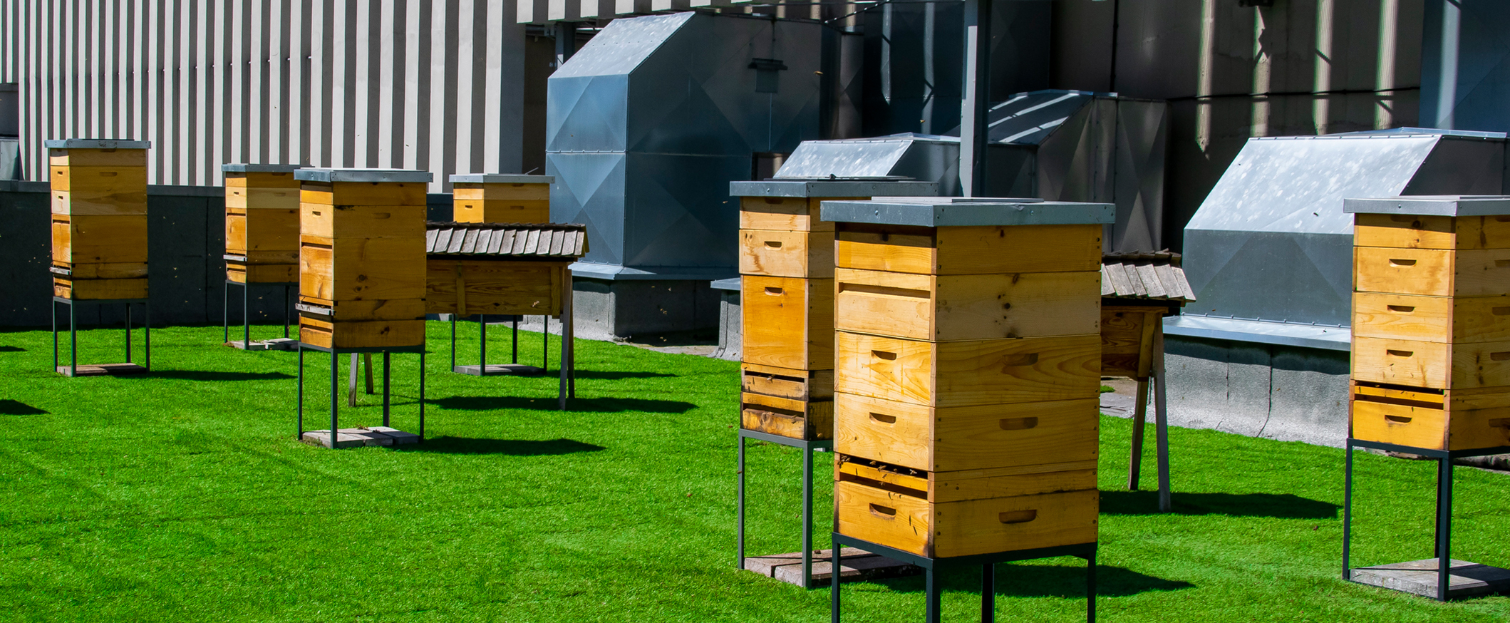 Bee Hives Next to an Industrial unit
